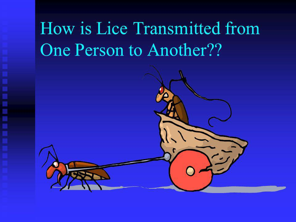 Adult Louse Difficult to see-move quickly Fewer than a dozen active lice on the head at any time Size of a sesame seed Tan to grayish Adult females li