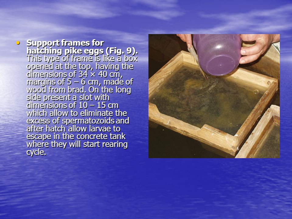 Support frames for hatching pike eggs (Fig. 9).