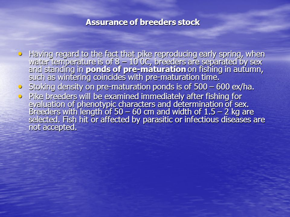 Assurance of breeders stock Having regard to the fact that pike reproducing early spring, when water temperature is of 8 – 10 0C, breeders are separated by sex and standing in ponds of pre-maturation on fishing in autumn, such as wintering coincides with pre-maturation time.