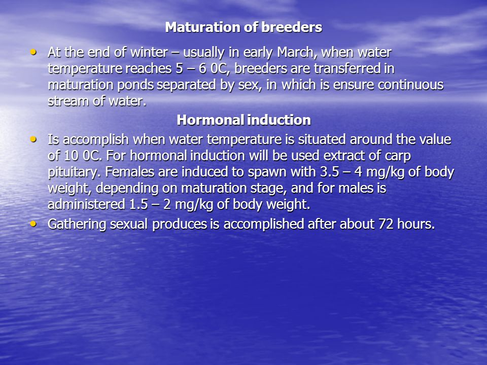 Gathering eggs and artificial fertilization Gathering eggs is made from perfect sexually matured females.