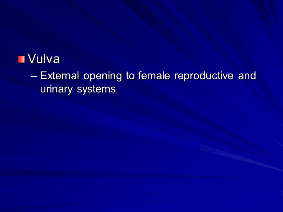 Vulva –External opening to female reproductive and urinary systems