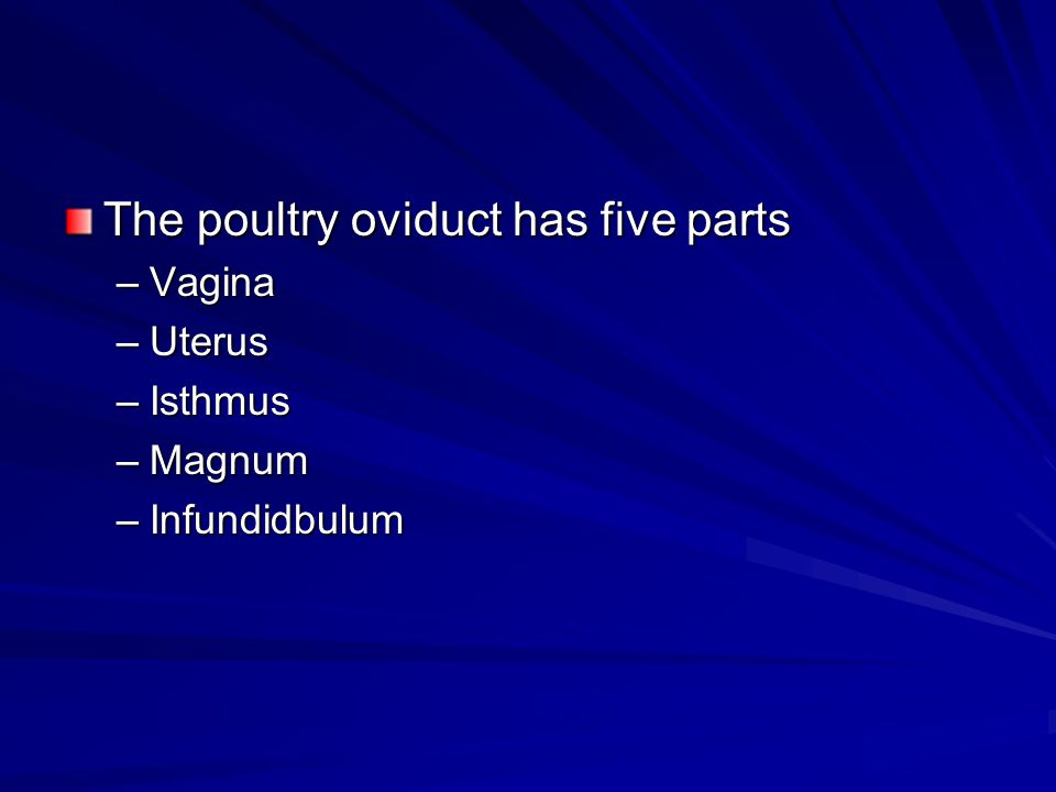 The poultry oviduct has five parts –Vagina –Uterus –Isthmus –Magnum –Infundidbulum