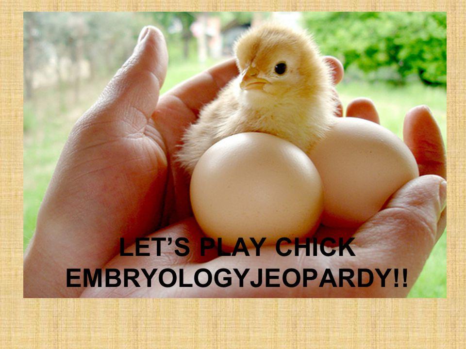 LETS PLAY CHICK EMBRYOLOGYJEOPARDY!!