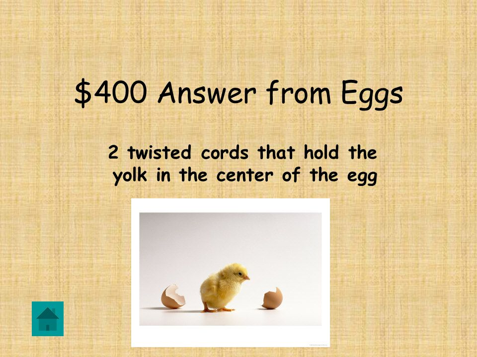 $400 Question from Eggs DOUBLE JEOPARDY What are the CHALAZAE