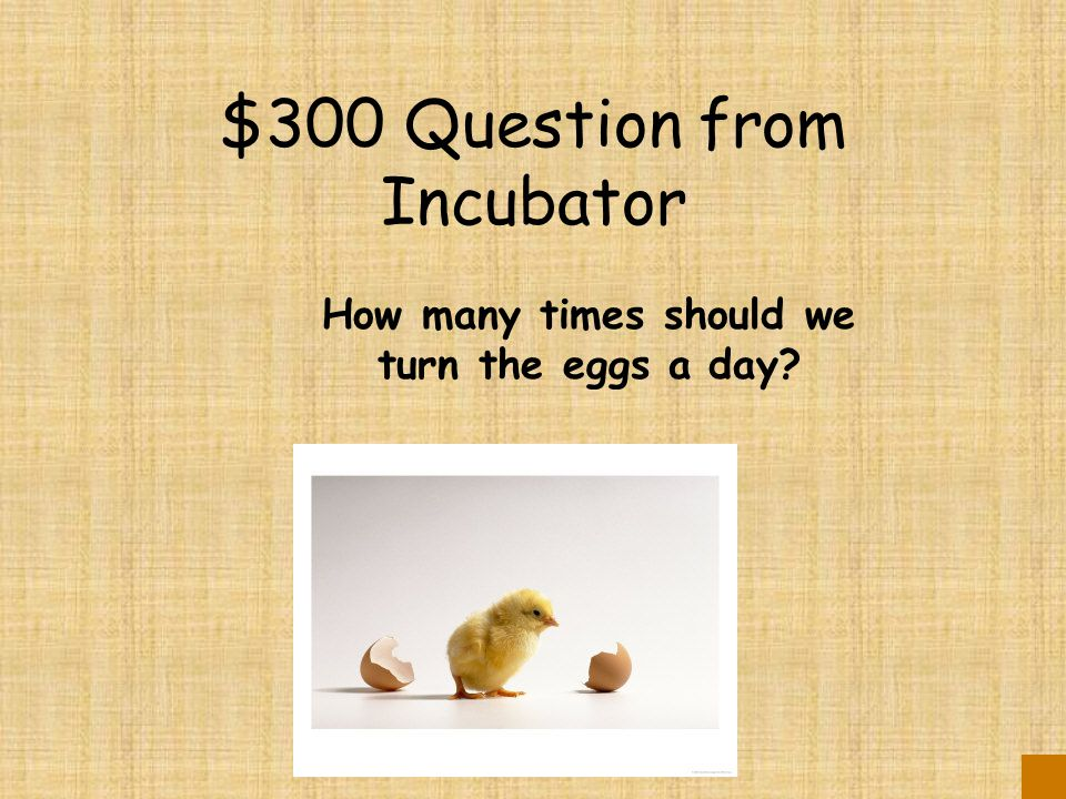 $200 Answer from Incubator 100 degrees