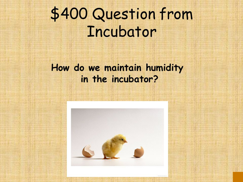 $300 Answer from Incubator 3 times – an odd number