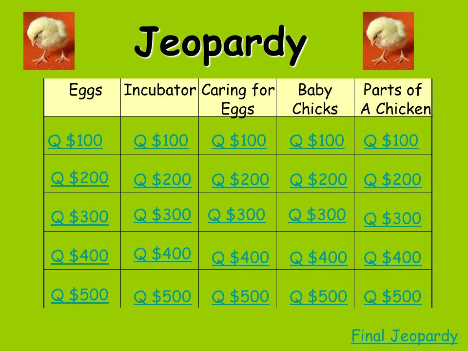 EggsIncubatorCaring for Eggs Baby Chicks Parts of A Chicken Q $100 Q $200 Q $300 Q $400 Q $500 Q $100 Q $200 Q $300 Q $400 Q $500 Final JeopardyJeopardy