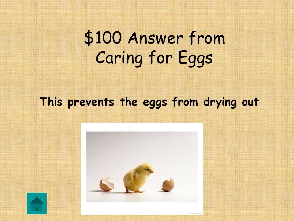 $100 Question from Caring for Eggs DOUBLE JEOPARDY Why do we put water in the incubator