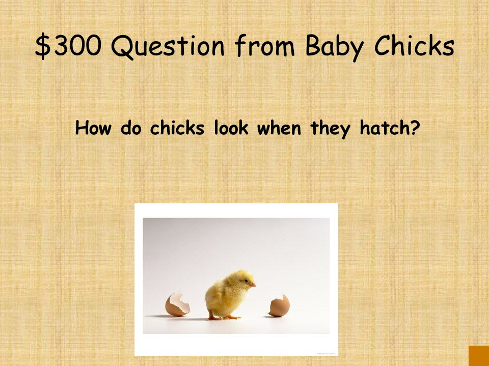 $200 Answer from Baby Chicks They use an egg tooth.