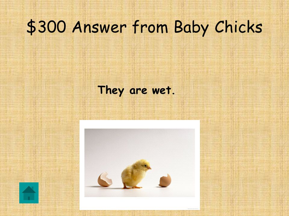 $300 Question from Baby Chicks How do chicks look when they hatch