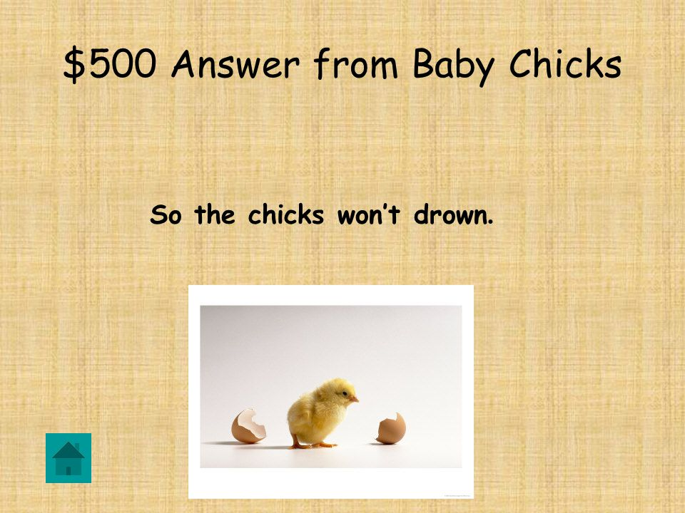 $500 Question from Baby Chicks Why are there channels in the water pan