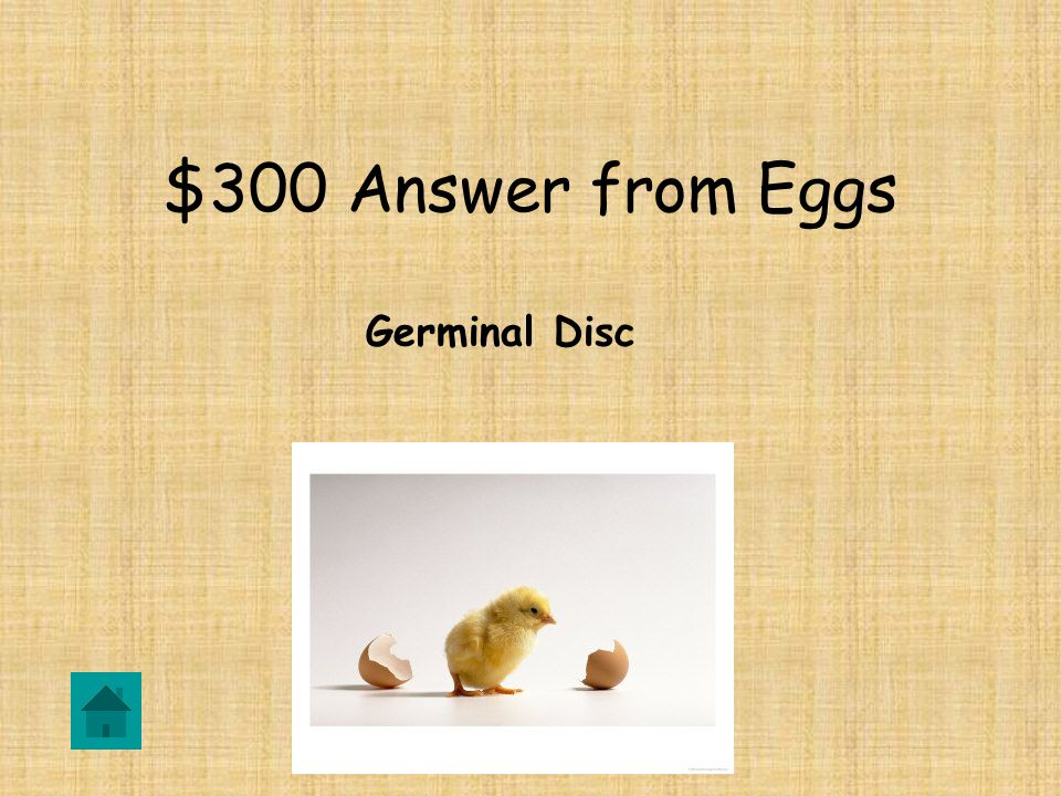 $300 Answer from Eggs Germinal Disc