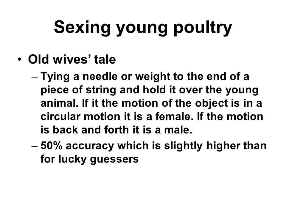 Sexing young poultry Old wives tale –Tying a needle or weight to the end of a piece of string and hold it over the young animal. If it the motion of t