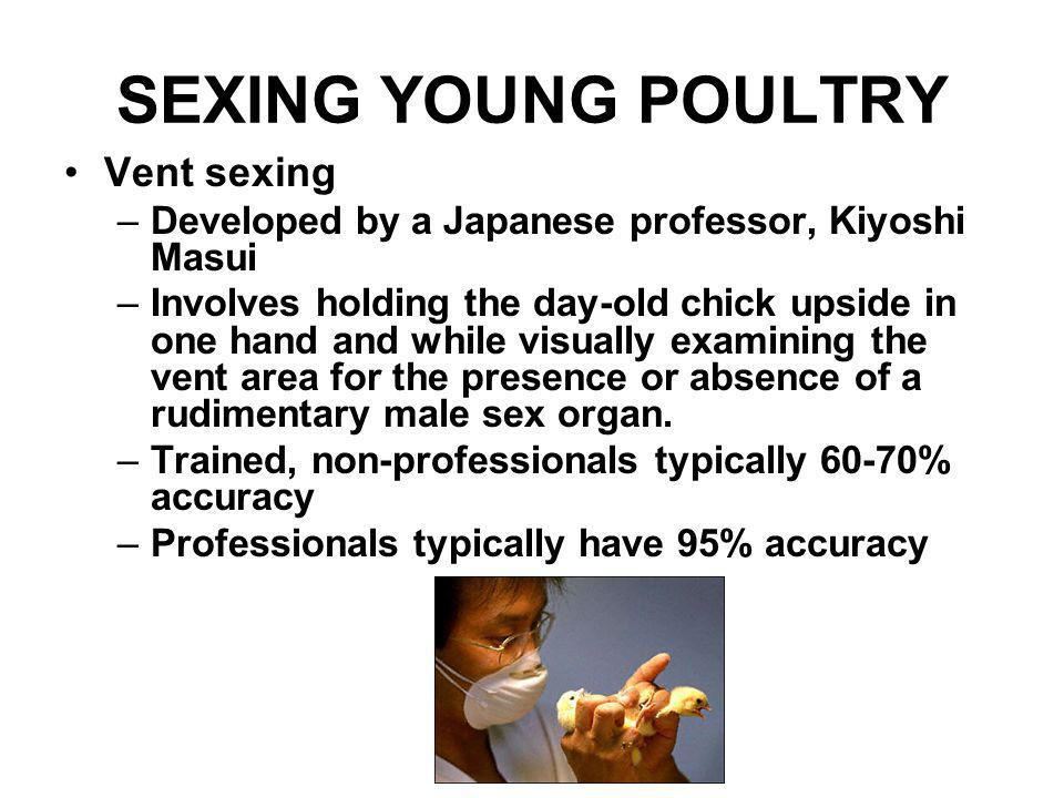 SEXING YOUNG POULTRY Vent sexing –Developed by a Japanese professor, Kiyoshi Masui –Involves holding the day-old chick upside in one hand and while vi