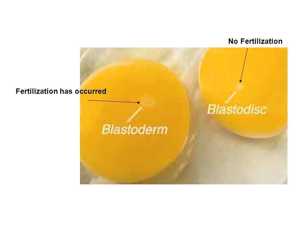 No Fertilization Fertilization has occurred
