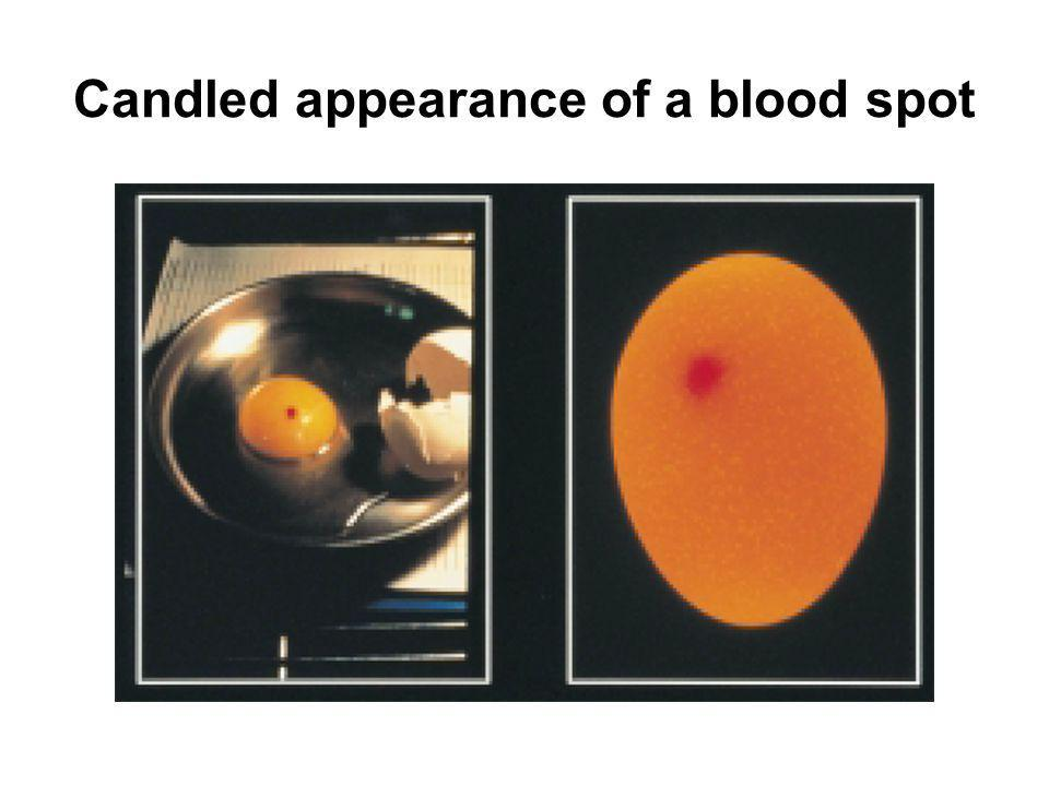Candled appearance of a blood spot