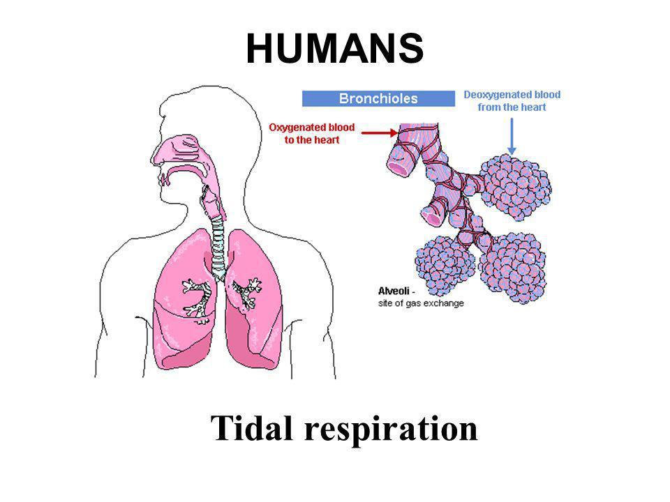 HUMANS Tidal respiration
