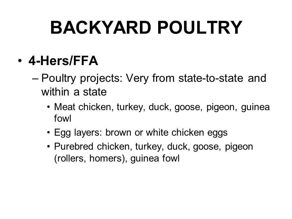 BACKYARD POULTRY 4-Hers/FFA –Poultry projects: Very from state-to-state and within a state Meat chicken, turkey, duck, goose, pigeon, guinea fowl Egg