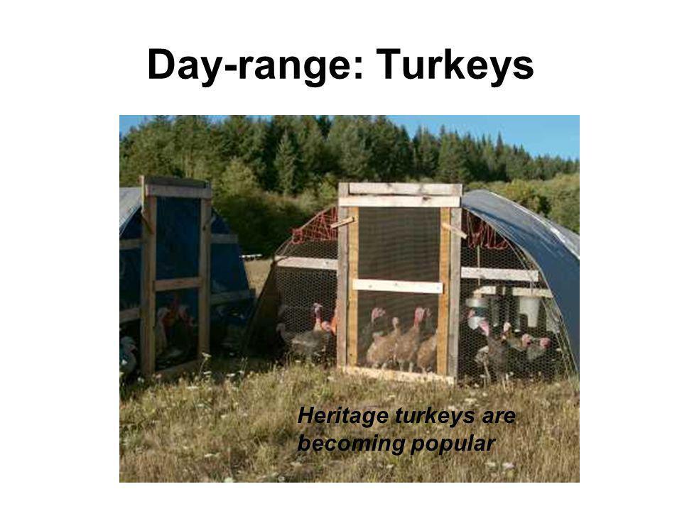 Day-range: Turkeys Heritage turkeys are becoming popular