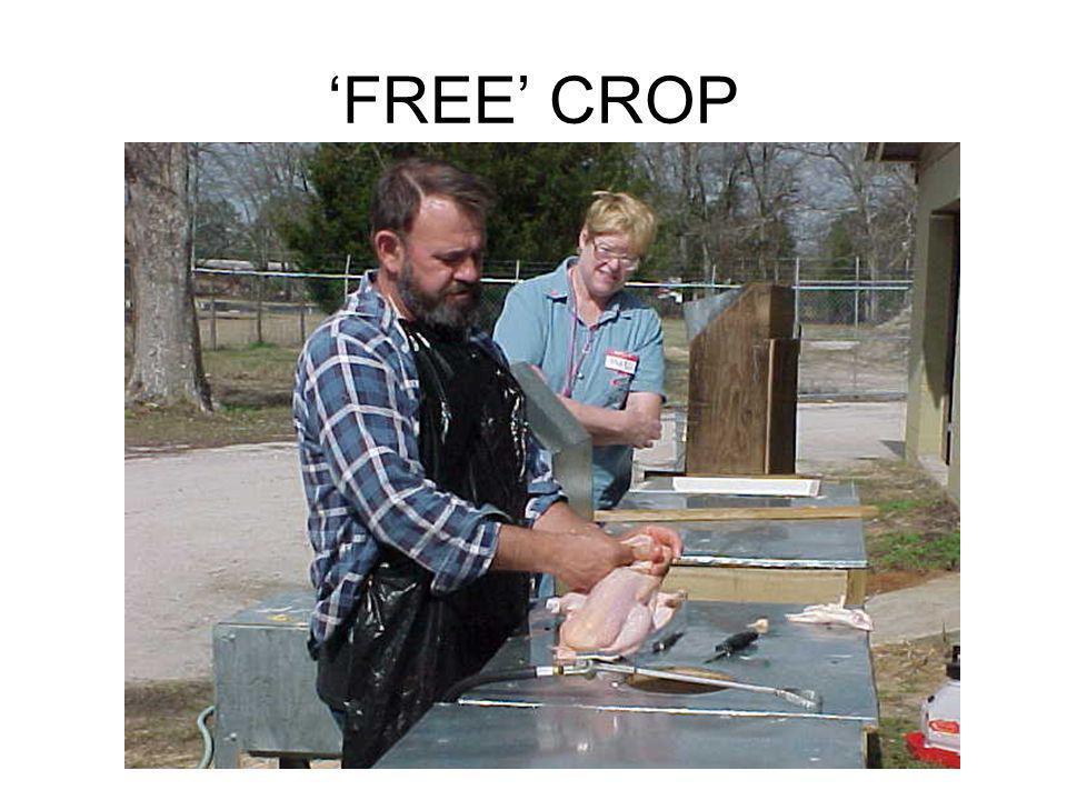 FREE CROP