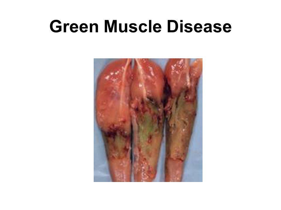 Green Muscle Disease