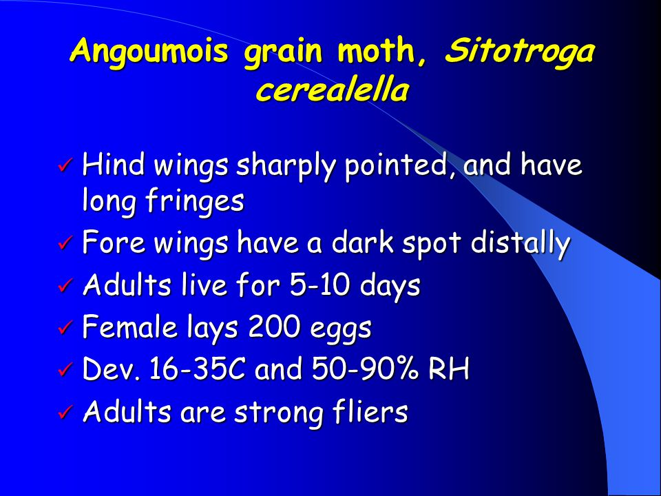 Stored-Product Moths Adult wings covered with scales Adult wings covered with scales Coiled mouth parts Coiled mouth parts Larvae – caterpillars, 3 pa