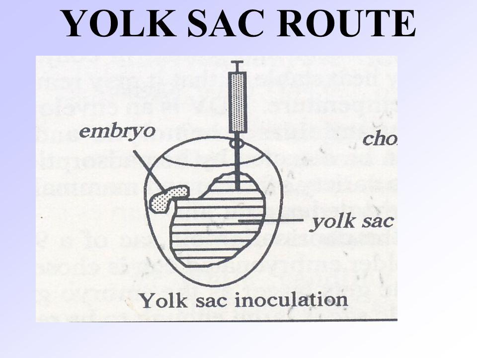 YOLK SAC ROUTE