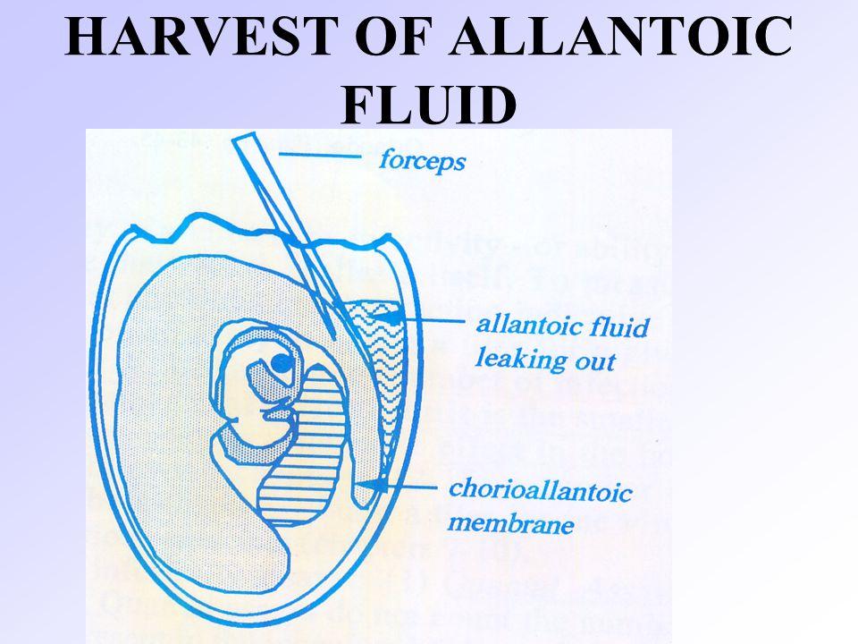 HARVEST OF ALLANTOIC FLUID