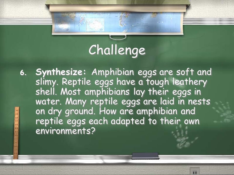 Challenge 6. Synthesize: Amphibian eggs are soft and slimy. Reptile eggs have a tough leathery shell. Most amphibians lay their eggs in water. Many re
