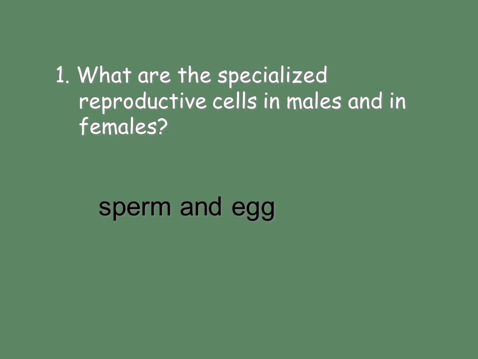 sperm and egg 1. What are the specialized reproductive cells in males and in females? sperm and egg
