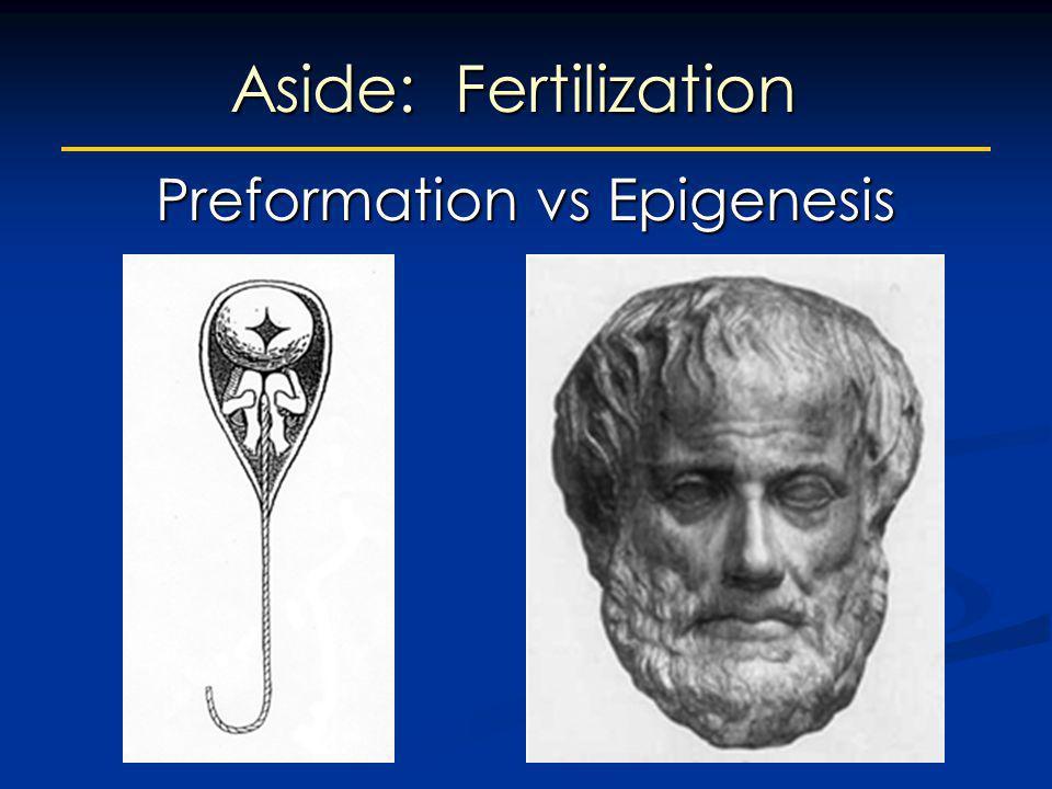 Aside: Fertilization Preformation vs Epigenesis