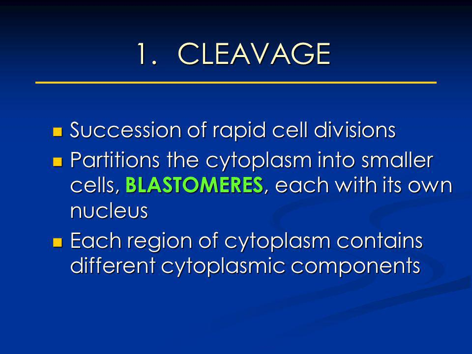 1.CLEAVAGE Succession of rapid cell divisions Succession of rapid cell divisions Partitions the cytoplasm into smaller cells, BLASTOMERES, each with i