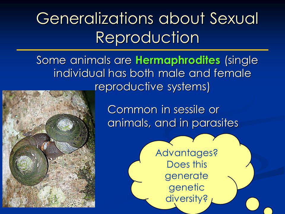 Some animals are Hermaphrodites (single individual has both male and female reproductive systems) Common in sessile or burrowing animals, and in paras
