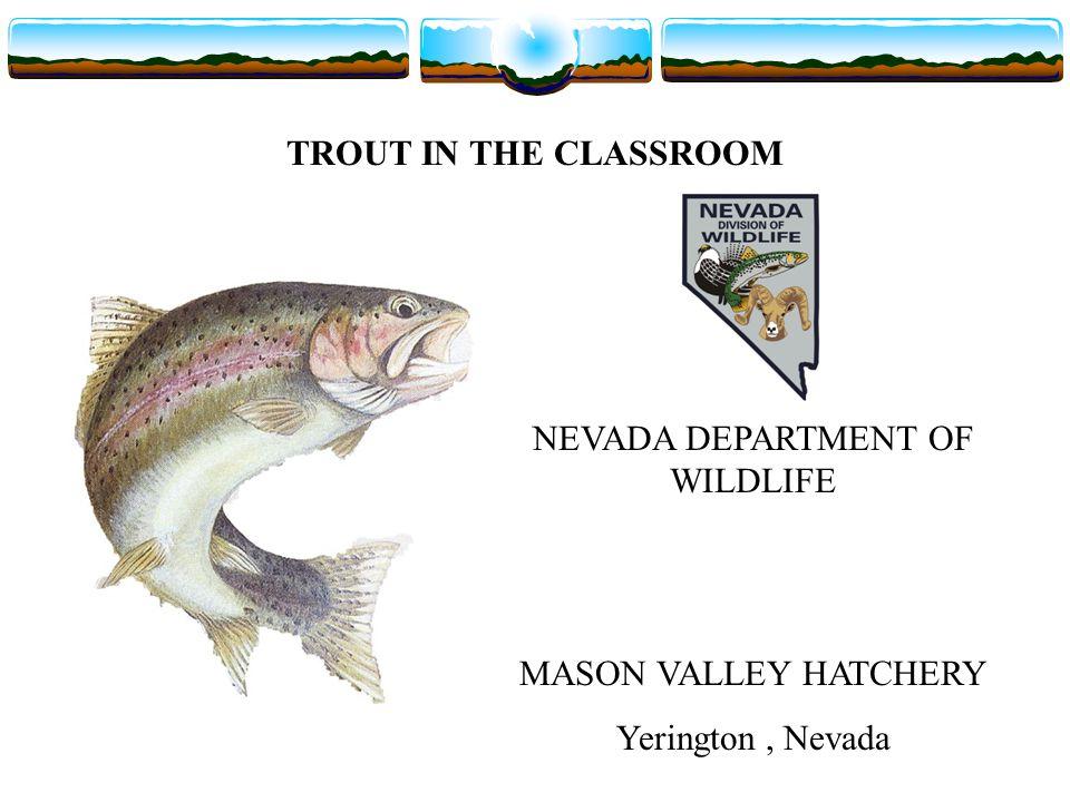 TROUT IN THE CLASSROOM NEVADA DEPARTMENT OF WILDLIFE MASON VALLEY HATCHERY Yerington, Nevada