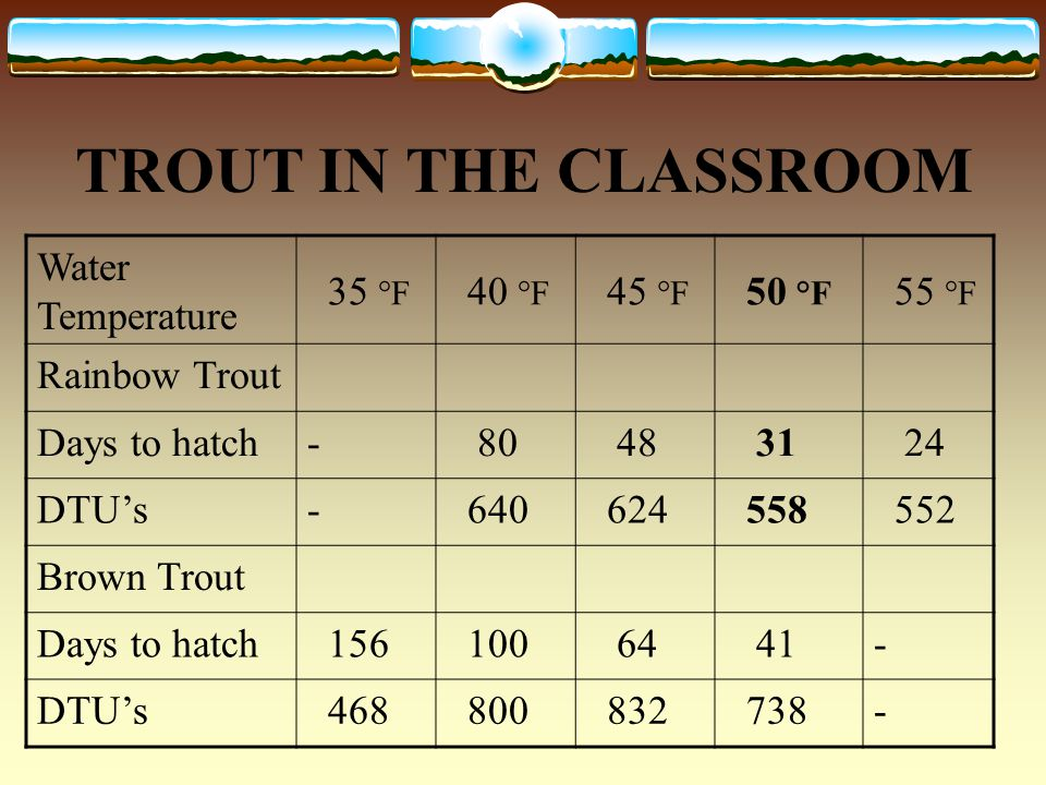TROUT IN THE CLASSROOM FACTORS EFFECTING EGG DEVELOPMENT LIGHT -Direct sunlight or UV light will effect the development of the eggs.