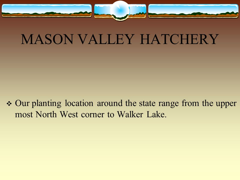 MASON VALLEY HATCHERY Our planting location around the state range from the upper most North West corner to Walker Lake.