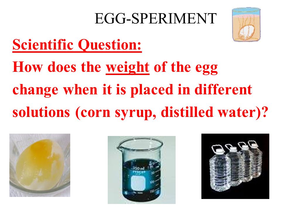 EGG-SPERIMENT Scientific Question: How does the weight of the egg change when it is placed in different solutions (corn syrup, distilled water)?