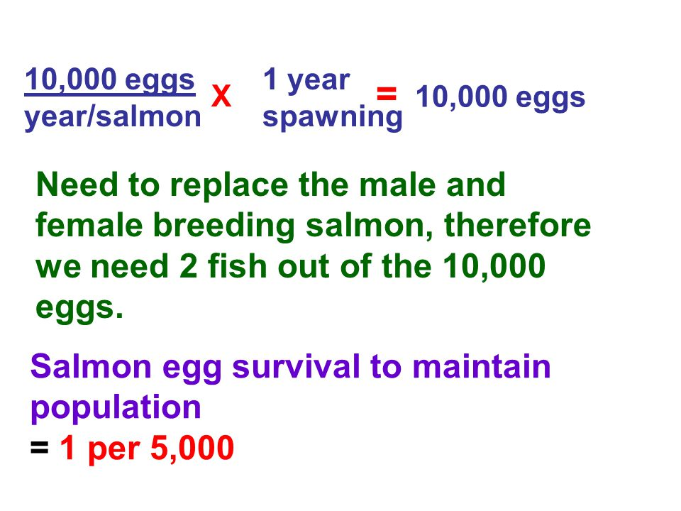 10,000 eggs year/salmon 1 year spawning = 10,000 eggs X Need to replace the male and female breeding salmon, therefore we need 2 fish out of the 10,00