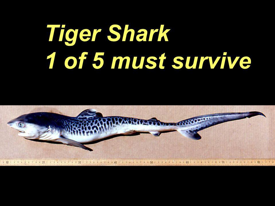 Tiger Shark 1 of 5 must survive