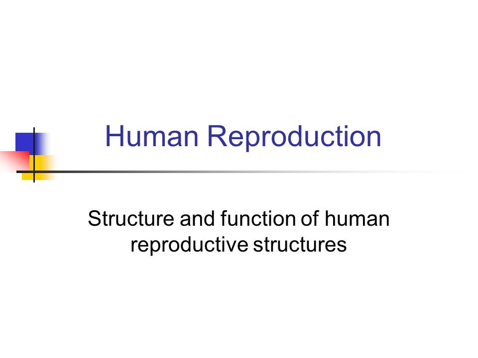 Human Reproduction Structure and function of human reproductive structures