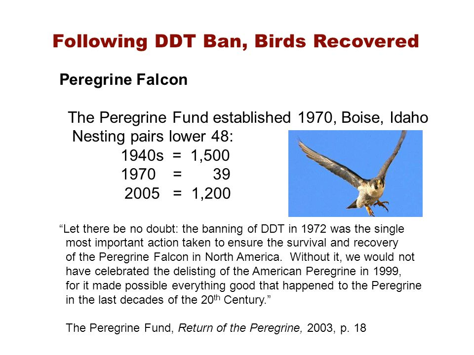 Following DDT Ban, Birds Recovered Peregrine Falcon The Peregrine Fund established 1970, Boise, Idaho Nesting pairs lower 48: 1940s = 1,500 1970 = 39