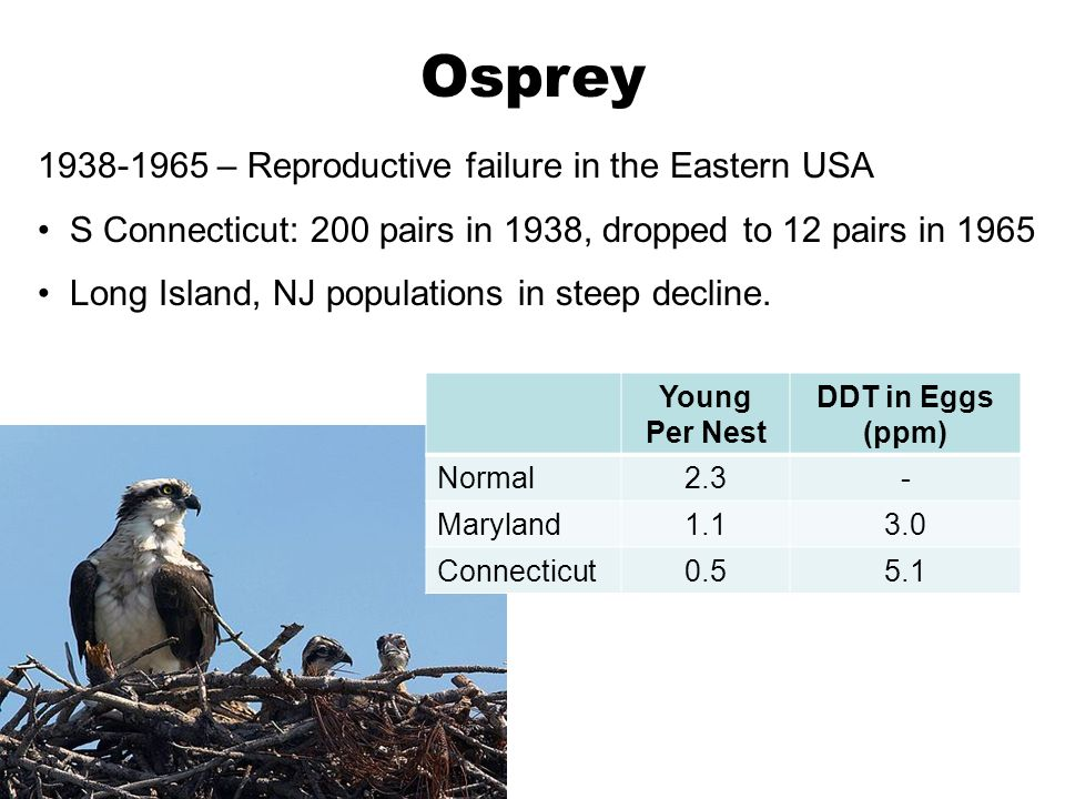 1940s-1970 Declining reproductive success and populations in Lower 48.