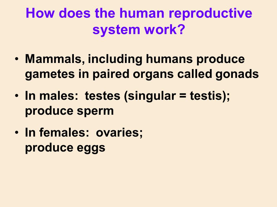 Some organisms are hermaphrodites; they produce both eggs and sperm & can self-fertilize E.g., tapeworm