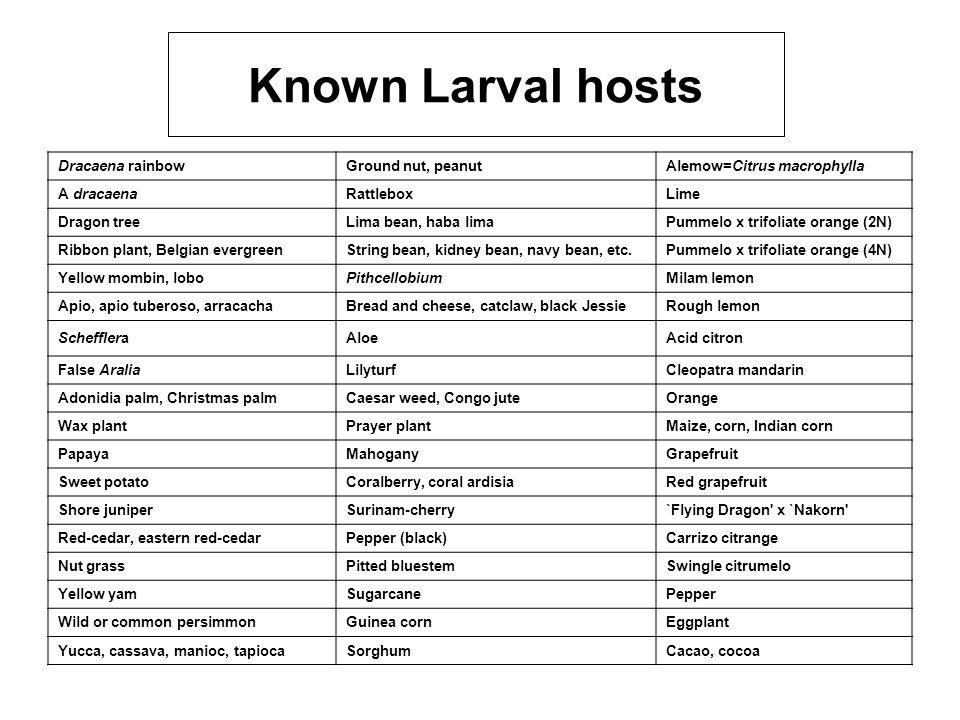 Known Larval hosts Dracaena rainbowGround nut, peanutAlemow=Citrus macrophylla A dracaenaRattleboxLime Dragon treeLima bean, haba limaPummelo x trifol