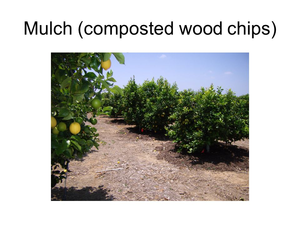 Mulch (composted wood chips)