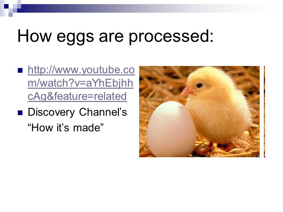 Draw an Egg: Label each part: Yolk Albumen (egg white) Chalazae Air pocket Shell