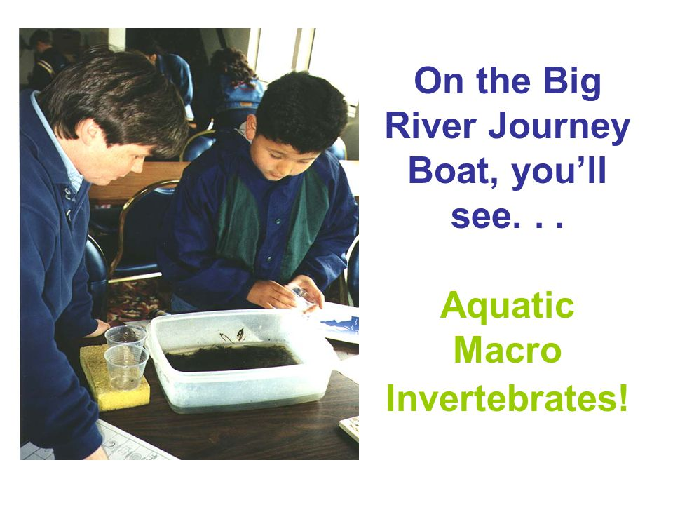 On the Big River Journey Boat, youll see... Aquatic Macro Invertebrates!