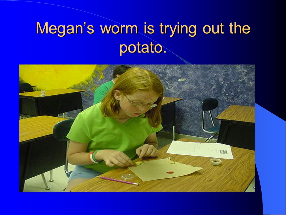 Megans worm is trying out the potato.