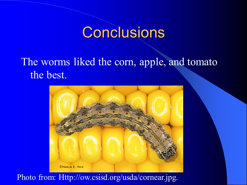 Conclusions The worms liked the corn, apple, and tomato the best. Photo from: Http://ow.csisd.org/usda/cornear.jpg.