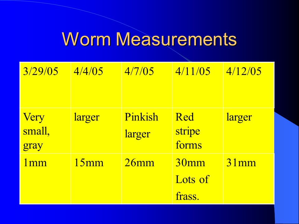 Worm Measurements 3/29/054/4/054/7/054/11/054/12/05 Very small, gray largerPinkish larger Red stripe forms larger 1mm15mm26mm30mm Lots of frass.
